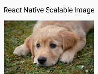 React Native Scalable Image – Android iOS Example